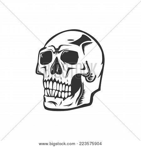 Monochrome illustration of skull. On white background.