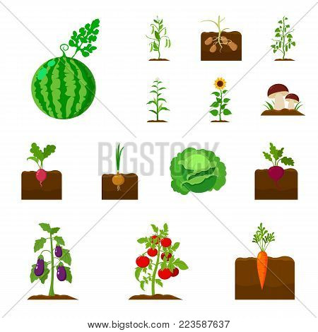 Plant, vegetable cartoon icons in set collection for design. Garden and harvest vector symbol stock  illustration.