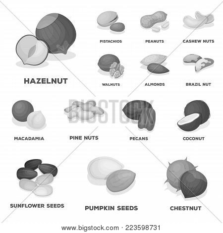 Different kinds of nuts monochrome icons in set collection for design.Nut Food vector symbol stock  illustration.