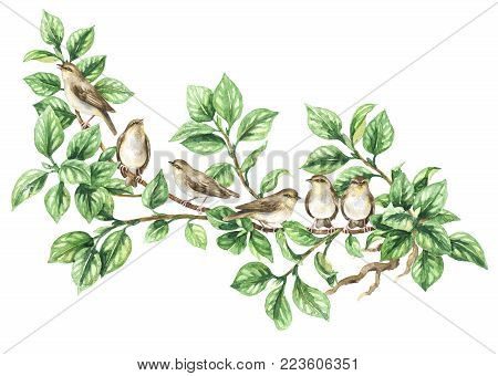 Watercolor painting.  Hand drawn animalistic illustration. Aquarelle sketch of forest birds family sitting on green tree branch. Songbirds flock isolated on white.