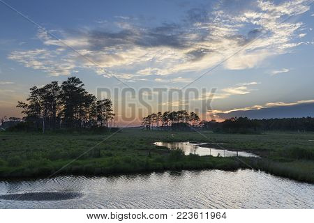 Pine Trees in Field with Ponds and Colorful Sky at Sunset