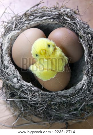 Toy Chicken In A Shell Of Bright Easter Egg In A Nest With Eggs