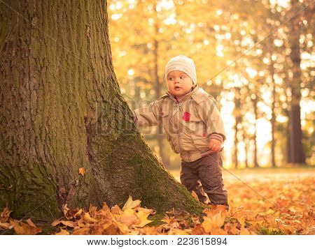 Curious little child boy exploring autumn park