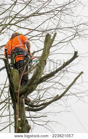 Tree Surgeons Climbing With Ropes And Cutting Trees