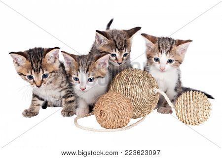 Various kittens with balls isolated on white