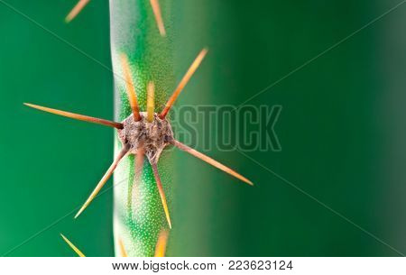 abstract background cactus thorns on green