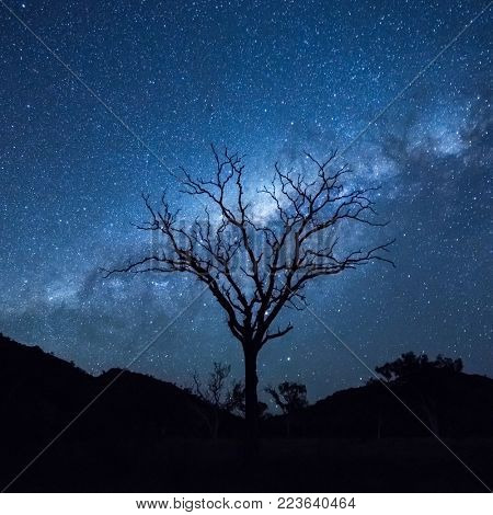 Tree silhouetting the Milky Way