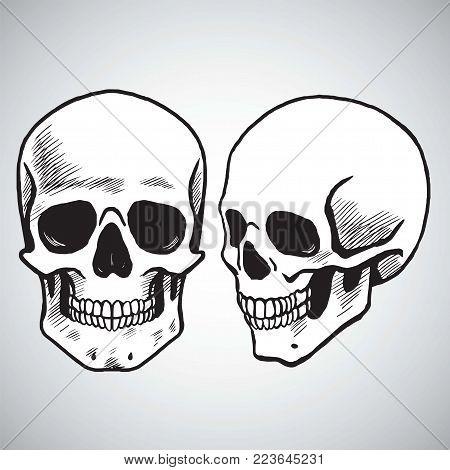 Hand Drawn Skull Set Illustration Drawing Vector