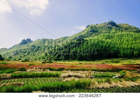 Colorful countryside scenery in autumn season, Guilin,China.