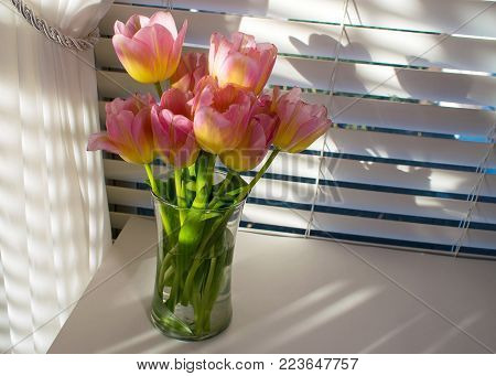 Pink and yellow tulips arranged in glass vase on table in front of window treatment of blinds and a curtain and natural light produces many shadows.