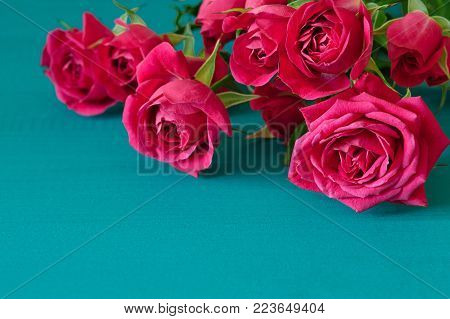 Red roses on blue wooden background. Valentines day background with red roses. Wedding background. Top view with copy space. Mother's Day, Happy birthday , Women's Day.