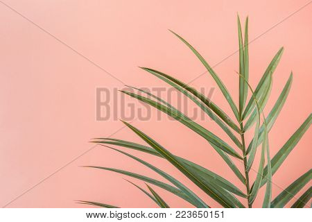 Spiky Palm Tree Leaf on Pink Peachy Wall Background. Room Plant Interior Decoration. Hipster Funky Style Pastel Colors. Seaside Vacation Fun Wanderlust Fashion Concept. Copy Space