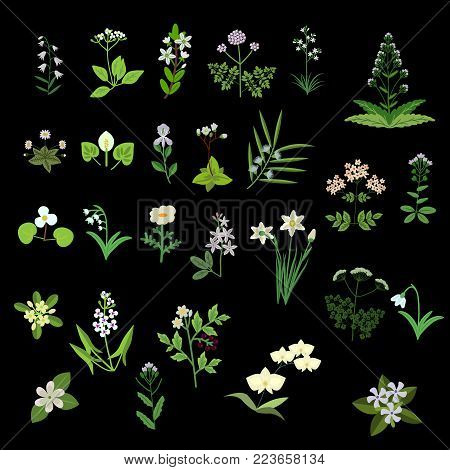 White vector isolated decorative various flowers set