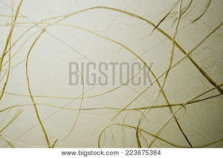 Dry yellow grass on beige papyrus, background.