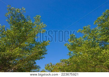 Green leaf foliage with beautiful sky background.