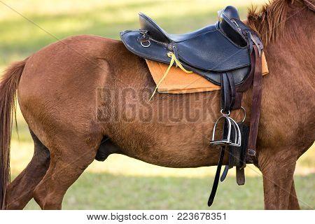 Saddle Pads, Pillow Cases, Saddles, Horse Riding