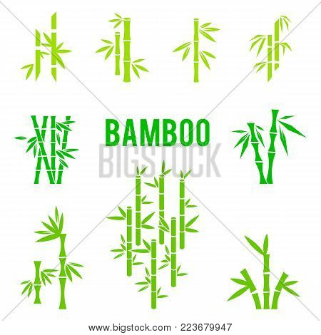 Stick bamboo with foliage and leaves, vector illustration. Bamboo stalks and leaves vector icons. Concept for spa and beauty salon, asian massage, cosmetics package, furniture materials.