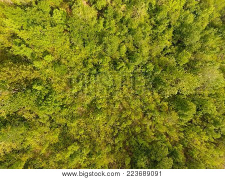 Aerial view of a temperate deciduous forest. Horizontal composition.