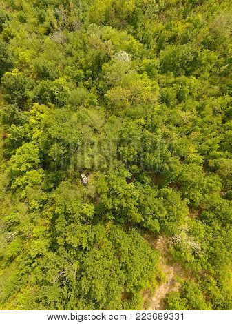Aerial view of a temperate deciduous forest. Vertical composition.