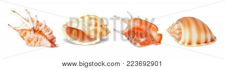 Set of vector illustrations seashells of various kinds in realistic style isolated on white