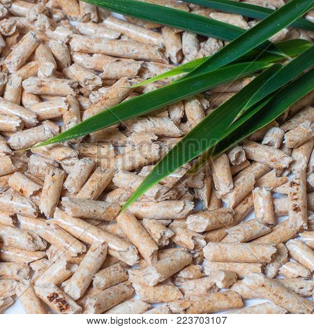 Wood pellets and green Leaves. Green energy concept. Square composition.