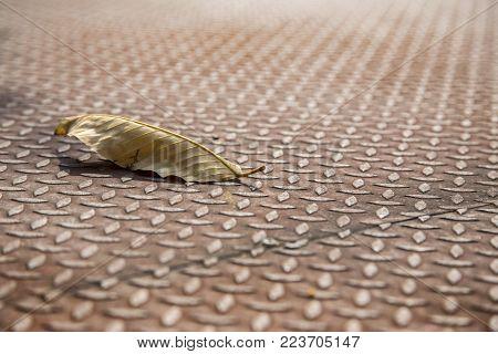 dry lieve on rusty steel floor in old concept