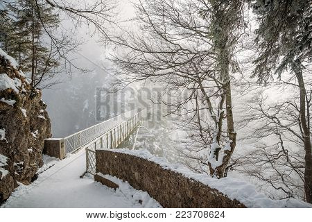 scenic view of trees and bridge in snow near Neuschwanstein Castle, Germany