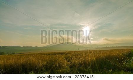 oat field with backlight and a hill in the backround