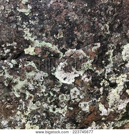 Surface of a mossy rock in a nature park located in Sabah, Malaysia.