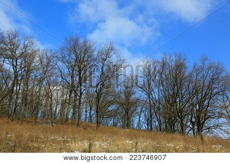 leafless trees on early spring meadow in sunny day