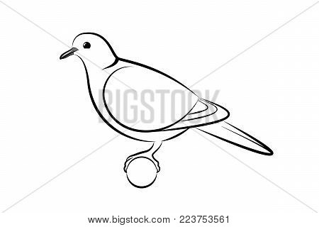 Collared Dove. Line Art Vector Illustration Of A Collared Dove
