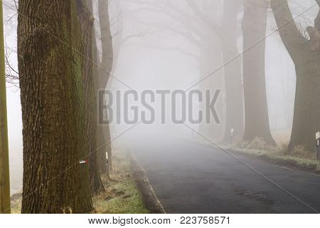 Tree Avenue With Road In The Fog - Elbtalaue National Park On The Elbe Germany