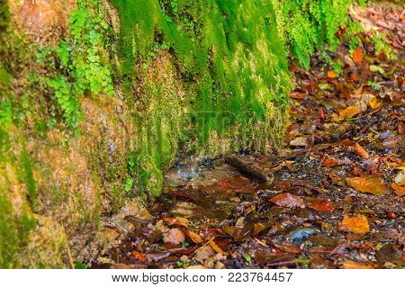 A wall of a mountain with wet vegetation, dry leaves lying on the ground and little puddle with dripping water