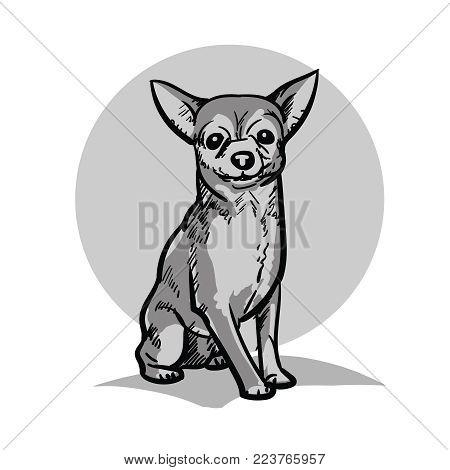 Chihuahua. A small dog. A small sitting dog. Illustration.
