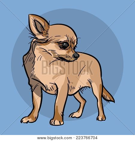Little Chihuahua Dog. The afflicted chihuahua dog turned and waited. Illustration