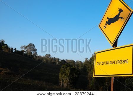 Beware animal (deer) traffic sign and background
