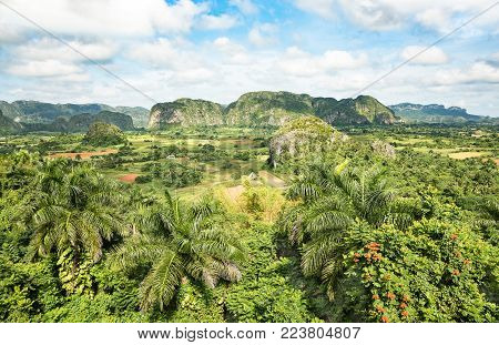 Panoramic postcard view of luxuriant vegetation in the famous valley of Vinales in west side of Cuba - Travel exploration concept with unesco world heritage site in caribbean latin america