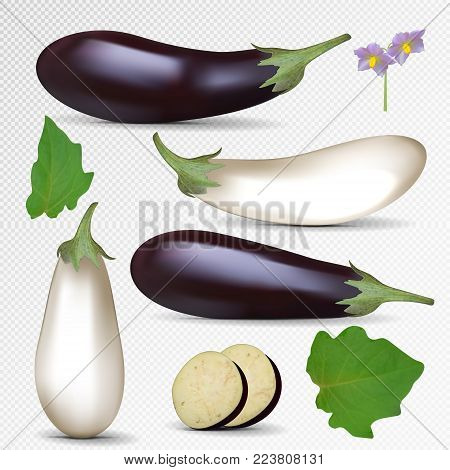 Vector fresh purple and white eggplant isolated on transparent background. White and violet eggplant with slice, flower and leaf. Realistic vector illustration