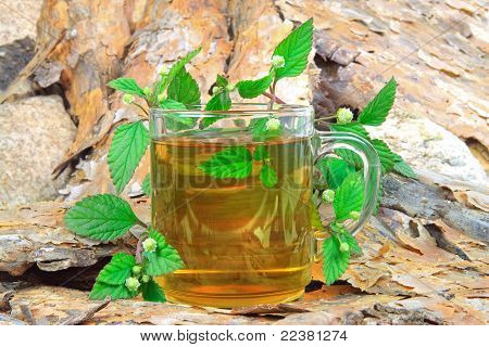 Tea with Aztec Sweet Herb (Lippa Dulcis) instead of sugar poster