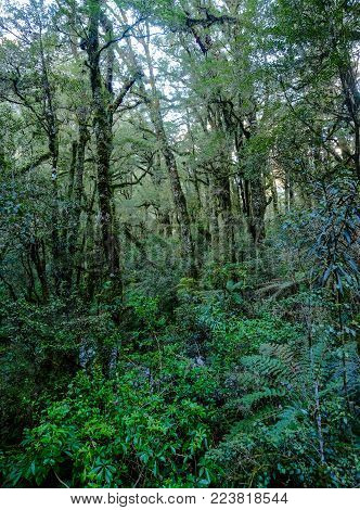 Beautiful Vivid Rainforest In New Zealand