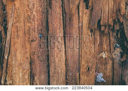 Splintered wood texture and background. Closeup view of splinter wood texture. Abstract texture and background for designers.