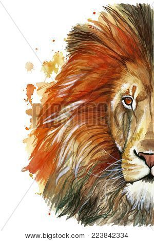 Watercolor drawing of an animal mammal animal predator of a red lion, red mane, lion-king of beasts, portrait of greatness, strength, kingdom, india, in front of a white background poster