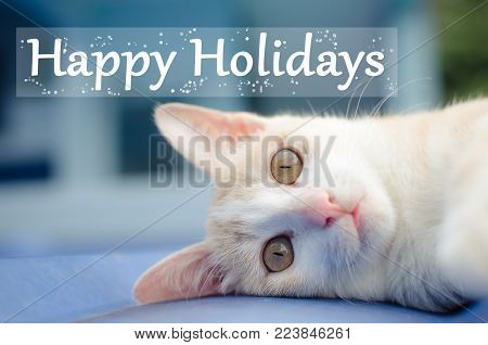 Cute cat lie down on the roof with happy holiday text
