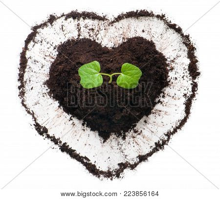 Plant growing out of a heart shaped soil. Sprout of morning glory flower. Ecology concept to Earth day.