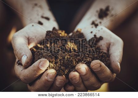Gardener with dirt for planting. Spring garden. Plant seedling in farmers hands.