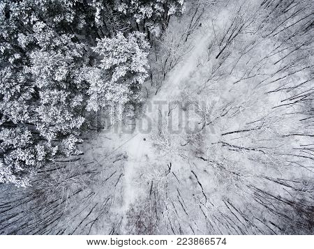 Aerial top view of wnowy winter forest