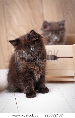 Black And Gray Kurilian Bobtail Cat Portrait. Gray Cat Sits In A Wooden Box In The Background. Selec