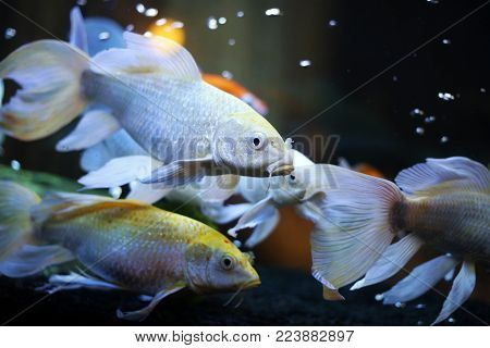 Aquarium fish. The development of aquarium fish at home