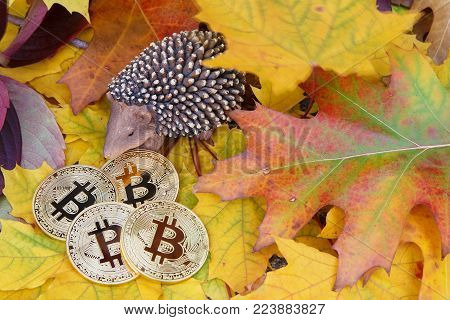Four Bitcoin golden coins lie on colorful autumn leaves near hedgehog, Closeup with Copyspace. Bitcoin deposit and price concept.
