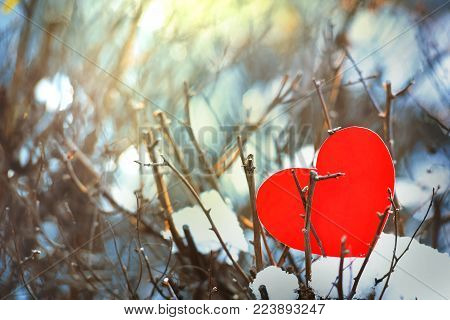 Lost red heart is alone on a valentines day, Heart on a cold winter snow, with a shining light around. Red heart stuck on the tree on a warm beautiful day as a symbol of love or a broken dream